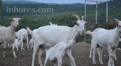 Dağbaşı Ekolojik Yaşam Tatil Çiftliği