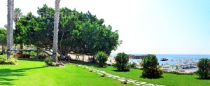 Marvel Tree Hotel
