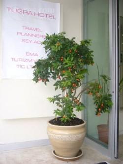 Tugra Hotel